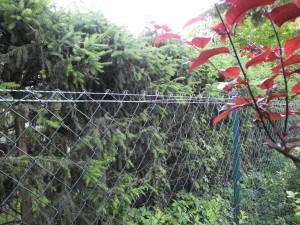 Zaun mit Elektrolitze
