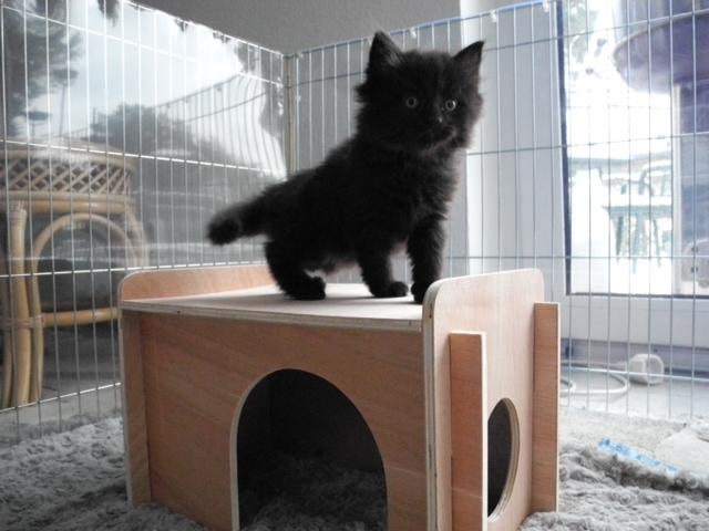 Kittenlaufstall II