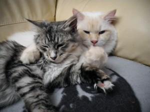 Pino und Prizzy auf der Couch
