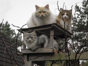 Pino und Felix auf dem Vogelhaus, Prizzy im Vogelhaus