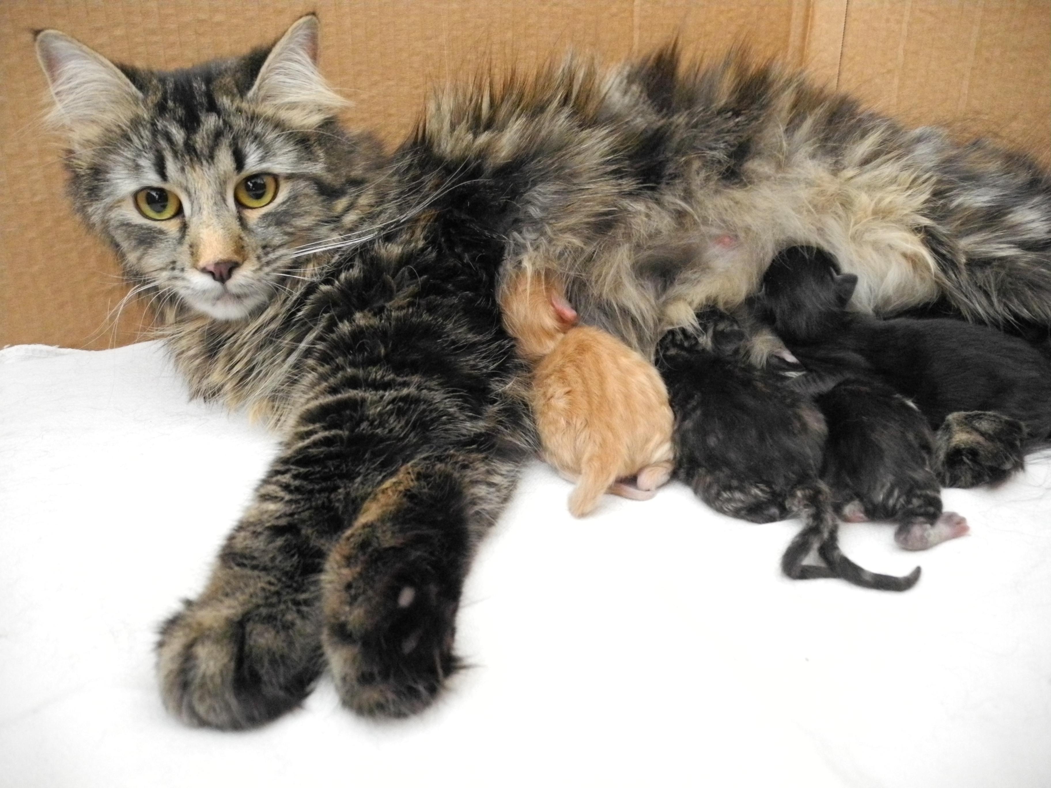 wie verhalten sich rollige katzen