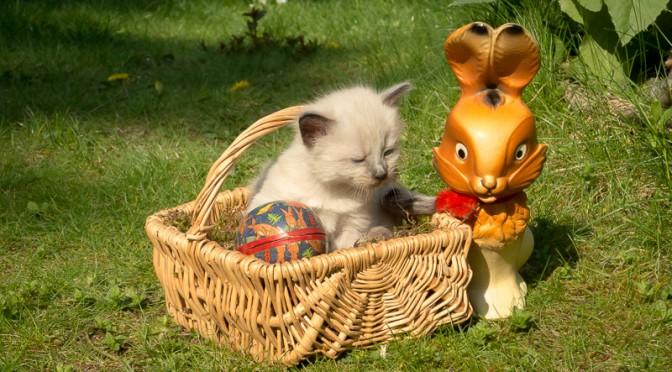 kleine Katze im Osterkorb mit Kunststoffhase