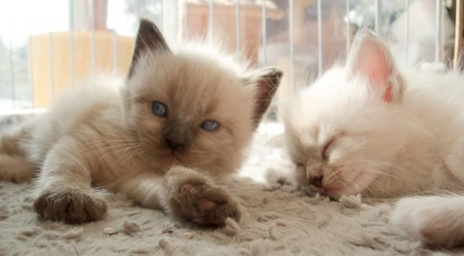 Unsere Katzenbabys sind 4 Wochen alt