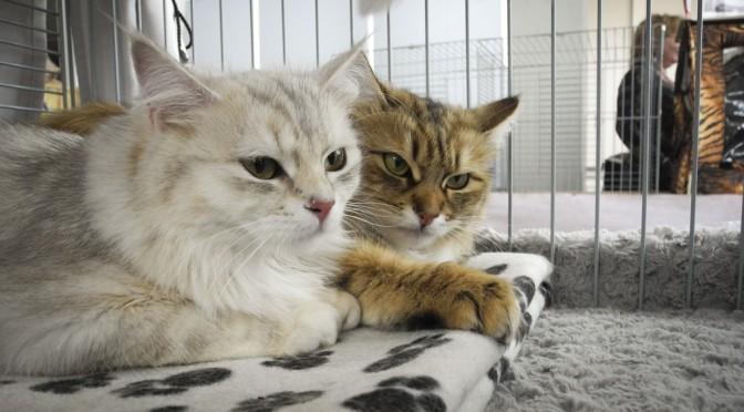 Katzenausstellung in Wildau