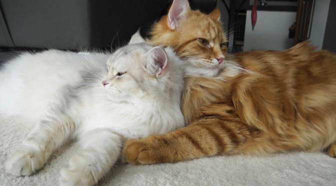 Zuwachs bei den Zuchtkatzen