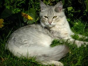 Bikila im Garten