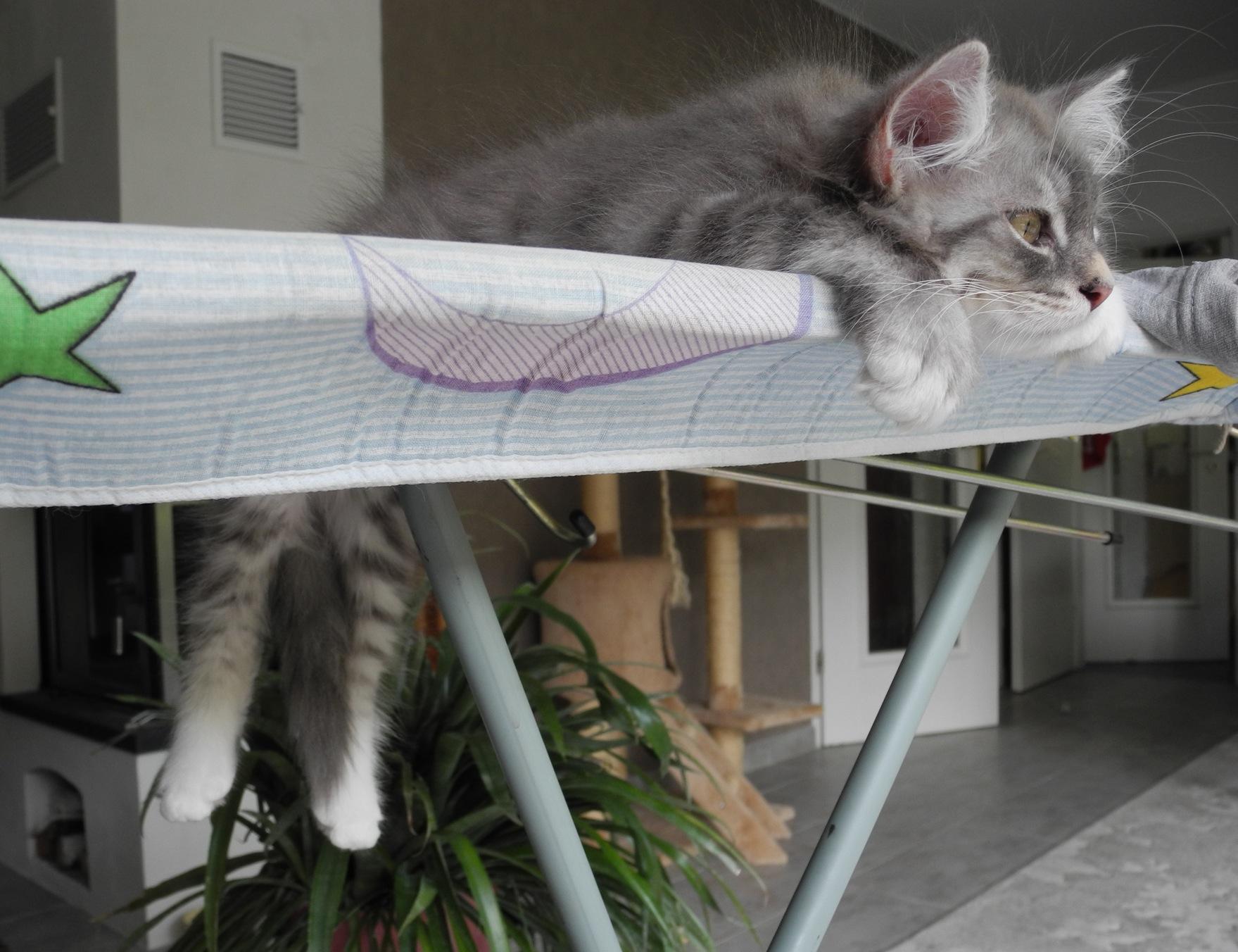 Viel zu heiß auch für Katzen