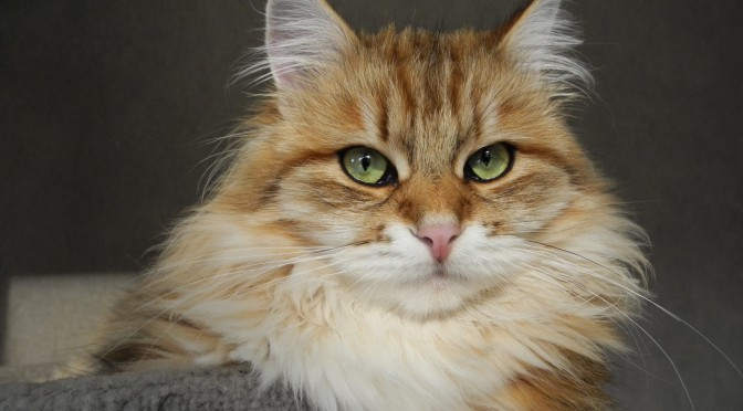 Unsere nächste Katzenausstellung