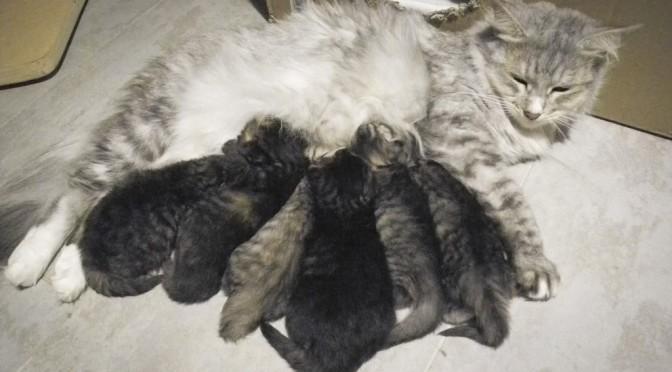 Die munteren Katzenbabys des N-Wurfs