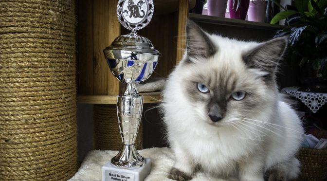 Katzenausstellung 2019