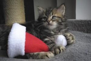 Frohe Weihnachten Katze.Weihnachten Mesarthim S