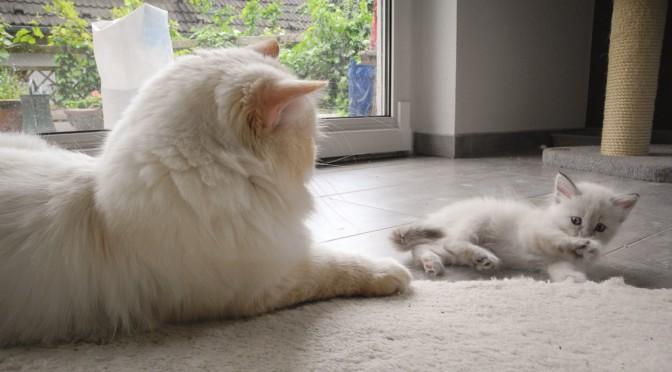 Ein passendes Zuhause für eine Katze