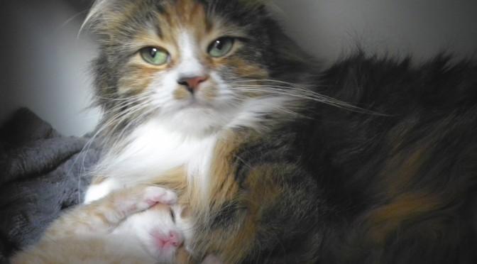 Rote Katzenbabys und Neva Mädchen