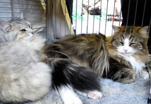Biki (l.) und Felix (r.)