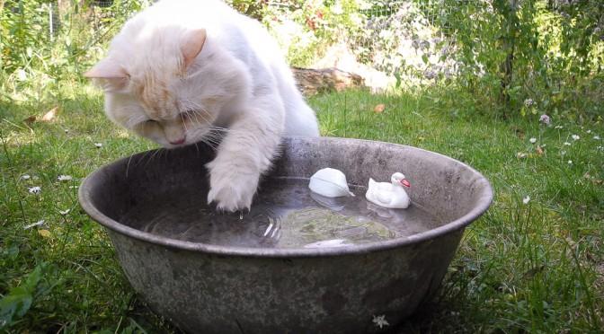 Tipps bei Hitze – Wenn es zu warm wird für Katzen