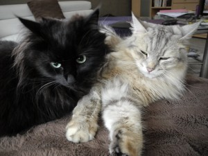 Sammy schmuset mit Biki