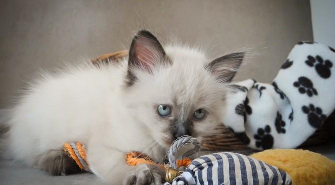 Warum wir ein Abgabealter bei Katzenbabys einhalten