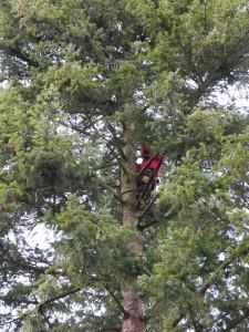 Herr R. auf ca. 15m Höhe im Baum